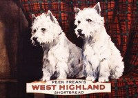 West_Highland_Sh_54f19d9631a77